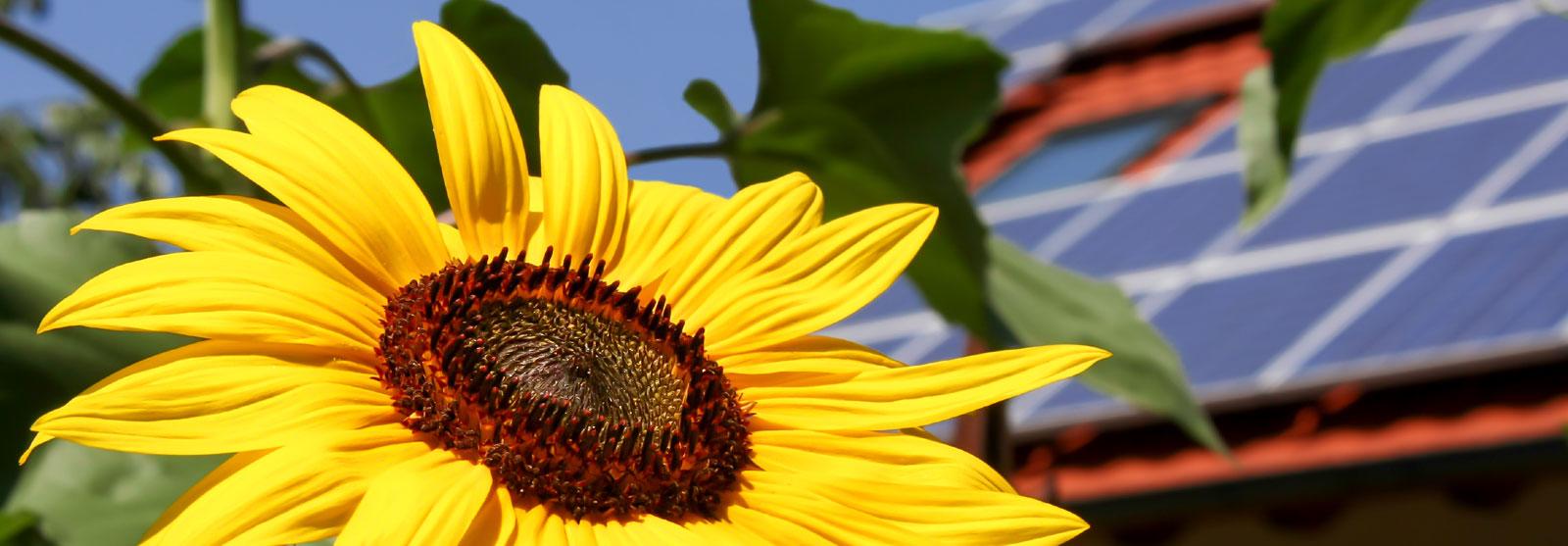 Nachhaltige Energie – kostengünstig und umweltschonend